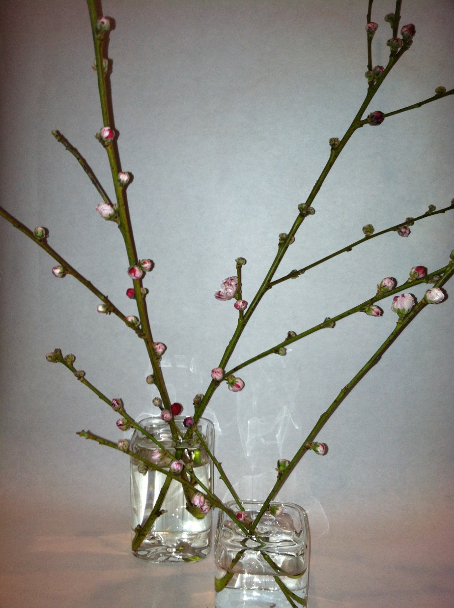 Cherry in vases