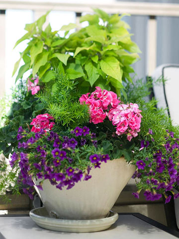 Wonderful Colorful Container from Better Homes and Gardens