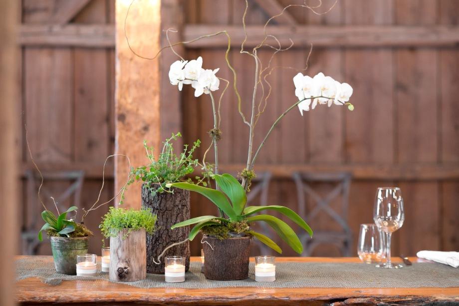 White Orchid CBD