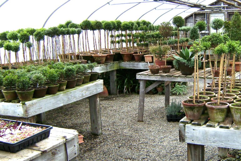 topiaries-greenhouse